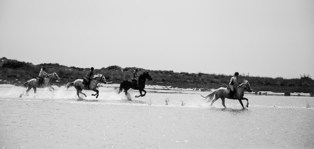 Equestrian tourism in France attracts growing numbers of visitors