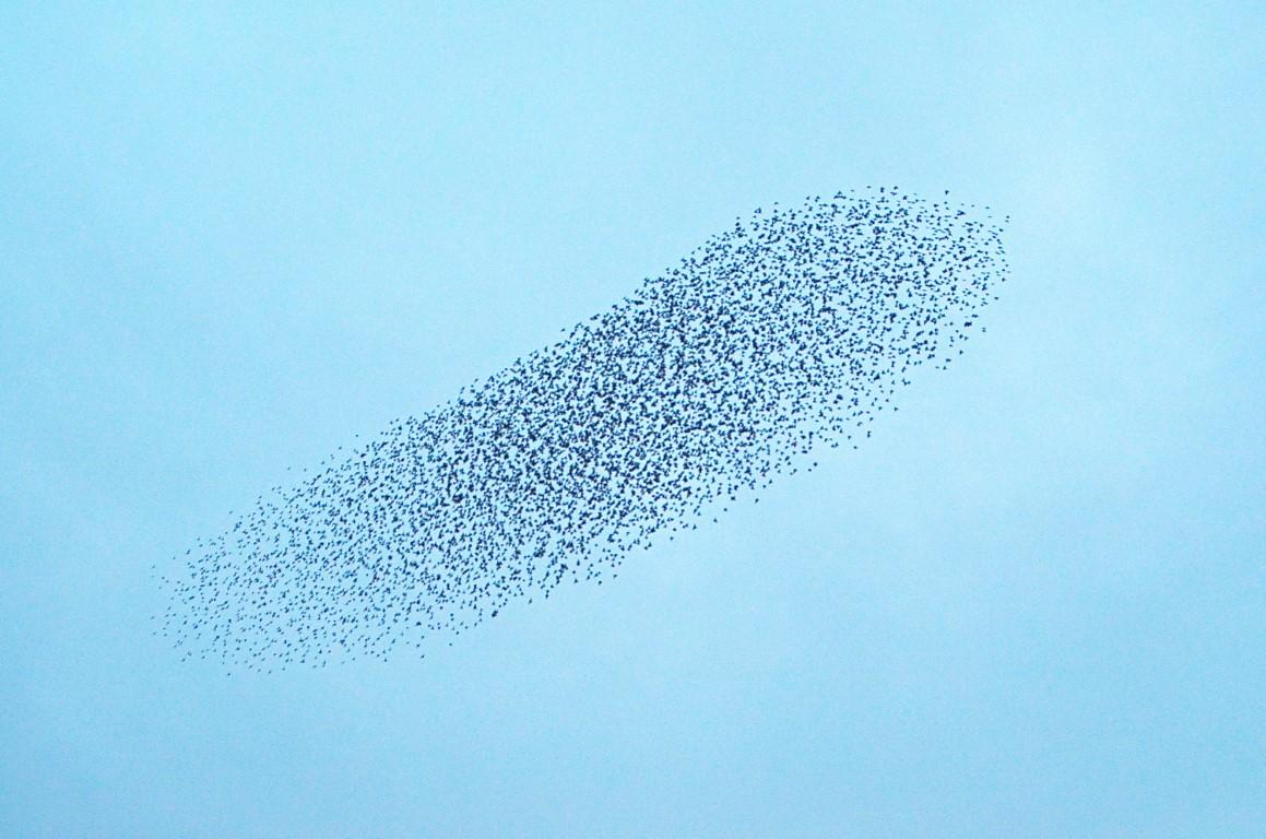 Swarm intelligence impact the tourism market