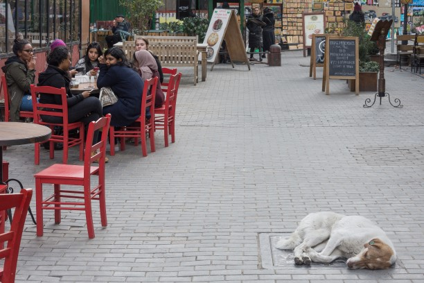 Stray Dogs in Tbilisi city center