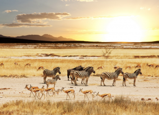 TOP 7 NATURAL SITES TO VISIT IN NAMIBIA