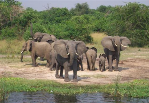 UGANDA BECOMING TOP TOURIST DESTINATION IN AFRICA