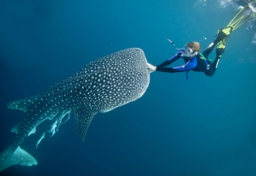 THE FINE LINE BETWEEN RESPECTING AND EXPLOITING THE PHILIPPINES' WHALE SHARKS