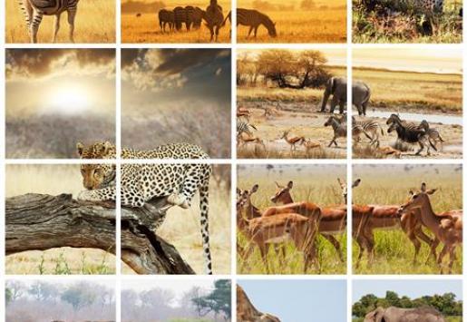 TOP 7 AFRICAN SAFARIS