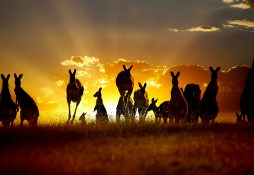 TOURISM INDUSTRY IN AUSTRALIA: NEW MEASURES LIKELY TO HARM THE SECTOR