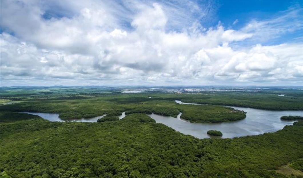 Anavilhanas River Archipelago