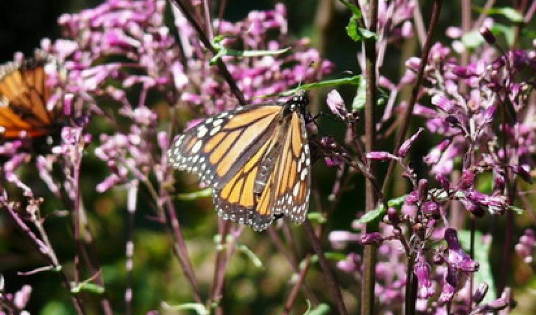 7. Michoacan Monarch Biosphere Reserve, Mexico