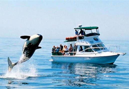 Responsible Whale Watching – Protect the Marine Life