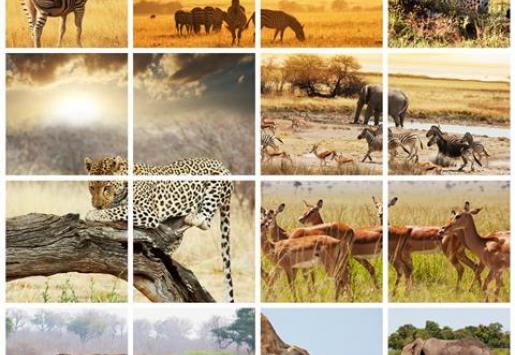 Report: Family Oriented Safari Is the Future