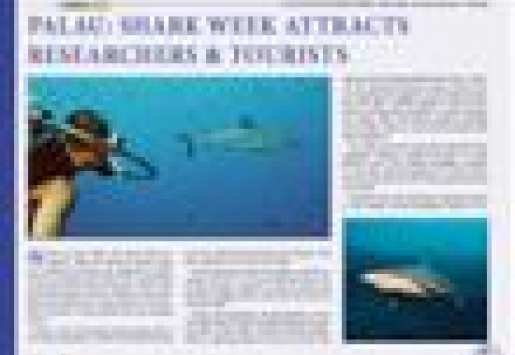 Palau: Shark Week Attracts Researchers and Tourists